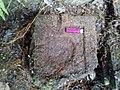 Tampak Atas, Batu Yoni Situs Batur Bedil, Banyumas.jpg