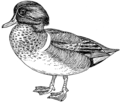 Teal 2 (PSF).png