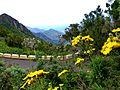 Teneriffa - Mercedeswald - panoramio.jpg