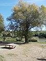 Teqball, tree and lake, 2020 Fót.jpg