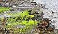 Tessellated Pavement 02.jpg