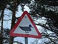 The Ducks of Hazard - geograph.org.uk - 155547.jpg