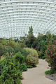 The Great Glasshouse @ National Botanic Garden Of Wales (3706173121).jpg