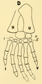 The Osteology of the Reptiles-200 kijhb iuhg kiujhgv.png