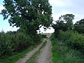 The bridle path bends left. - geograph.org.uk - 535635.jpg