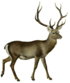 The deer of all lands (1898) Hangul white background.png