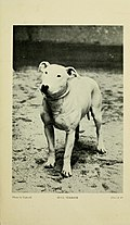The encyclopaedia of the kennel - a complete manual of the dog, its varieties, physiology, breeding, training, exhibition and management, with articles on the designing of kennels (1913) (14768073165).jpg
