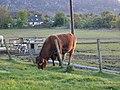 The grass is greener - geograph.org.uk - 55516.jpg