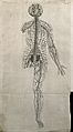 The nervous system of the human body. Engraving by J. Wandel Wellcome V0007816ER.jpg