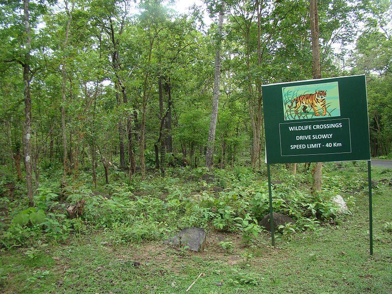 File:Tikarpada Tiger Reserve.JPG