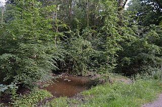 Tile Wood Essex Wildlife Trust Nature reserve
