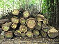 Timber by Troy Bridge - geograph.org.uk - 551105.jpg