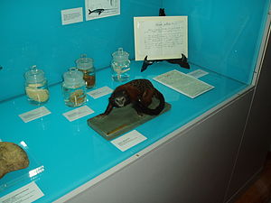 "Mariano de la Paz Graëlls y de la Aguera - Exhibit case in the Museo Nacional de Ciencias Naturales, Madrid, Spain – ""Life and work of Graells"""