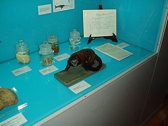 """Mariano de la Paz Graëlls y de la Aguera - Exhibit case in the Museo Nacional de Ciencias Naturales, Madrid, Spain – """"Life and work of Graells"""""""