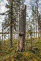 Tiurajärven uhripuu.jpg