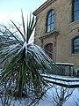 Tiverton , Palm and St George's Church - geograph.org.uk - 1658343.jpg