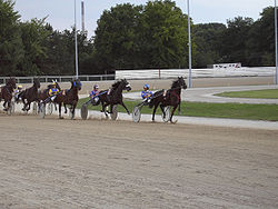The Standardbred is best known as a harness racing breed.