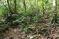 Trail of Mount Omoto 201912 04.jpg
