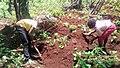 Travail de l'enfant camerounais 02.jpg