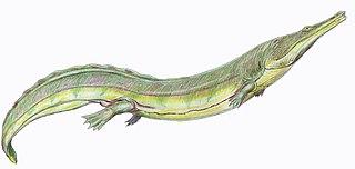 Trematosauroidea superfamily of amphibians (fossil)
