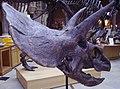 Triceratops head.JPG