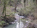 Tryon Creek State Natural Area - Oregon 2012.JPG