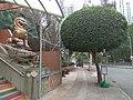Tsz Wan Kok Temple 12.jpg