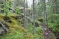 Tullviksbäckens naturreservat2.jpg