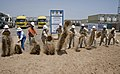 US Navy 090520-N-7526R-005 Capt. Patrick Gibbons, commanding officer of Camp Lemonier, Djibouti, Capt. William Finn, prospective camp commanding officer, and members of the URS-IAP World Services organization break ground on a.jpg