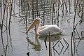 Ueno zoo, Tokyo, Japan (2373578524).jpg