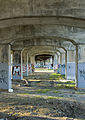 Under the bridge (497296264).jpg
