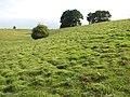 Undulating pasture - geograph.org.uk - 1396182.jpg