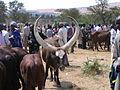 Vaches et marchands au marché de Mbare 3.JPG