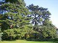 Verrieres Arboretum1.jpg