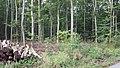 Vestskoveen 05.jpg