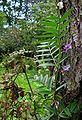 Vicia sepium20090912 335.jpg