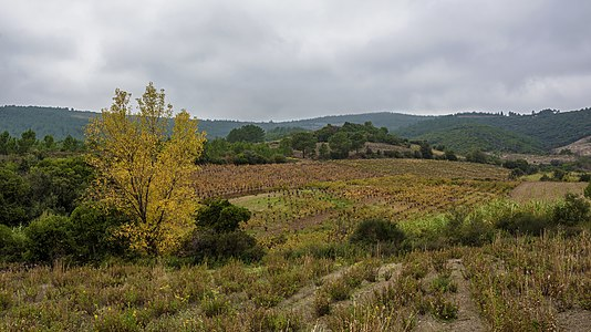 Landscape and vineyards in Prades-sur-Vernazobre, France