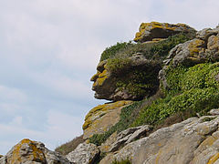 Pareidolia of a face in a rock