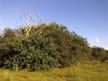 Vlakte van Waalsdorp (Waalsdorpervlakte) 2016-08-10 img. 527.png
