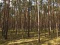 Wald Müggelspree-Löcknitzer Wald- und Seengebiet.jpg