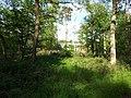 Wald bei Germersheim - geo.hlipp.de - 24946.jpg