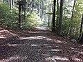 Waldweg bei Hinter Jungalbis.jpg