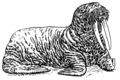 Walrus 2 (PSF).png