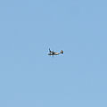 Was fliegt da ueber'm Walchensee? - AHA, Barack's Osprey! (18439085096).jpg