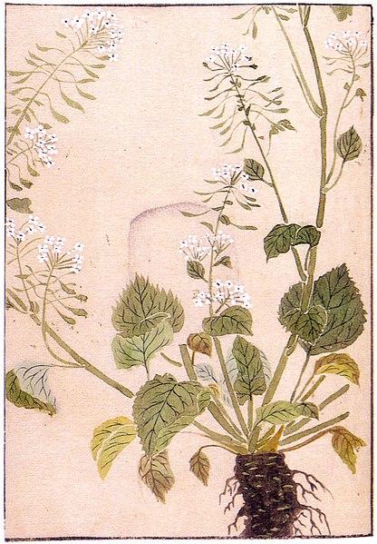 Soubor:Wasabi, Iwasaki Kanen 1828.jpg