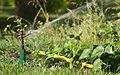 Water springler - Toulouse - 2013-07-22.jpg