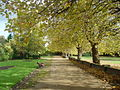 Wavertree Botanic Gardens - DSC00724.JPG