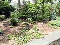 Wellesley College Botanic Gardens - DSC09705.JPG