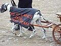 West Lancs dog display team, Southport 1.JPG