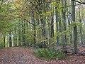 West Woods - geograph.org.uk - 278341.jpg
